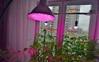 Рассеянный свет для цветов как сделать
