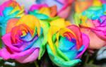 Как сделать анальную розу