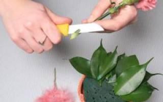 Цветы в губке как сделать