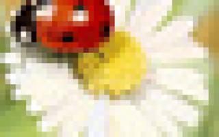 Сделал каменный цветок сканворд 6 букв