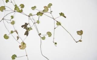 Как сделать гербарий картинки