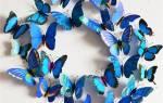Как сделать бабочку из картона