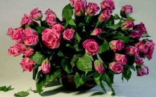 Как из розы сделать саженец
