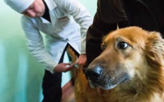 Сделать прививку собаке на дому