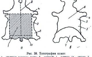 Чертеж сделанный от руки 5 букв сканворд