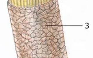 Из чего сделаны волосы человека