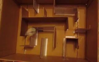 Как сделать из коробки лабиринт